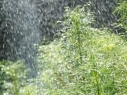 庭木の水やり